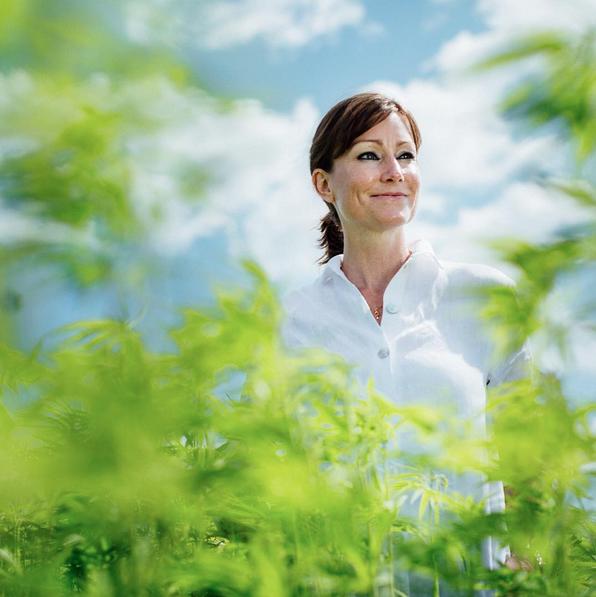 Hamp, bæredygtig omstilling, bioøkonomi, nordisk mode, landbrugsinnovation